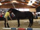 Pferdeflüsterer Festival 2006
