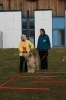 Training mit Linda Tellington-Jones Okt 2007_4